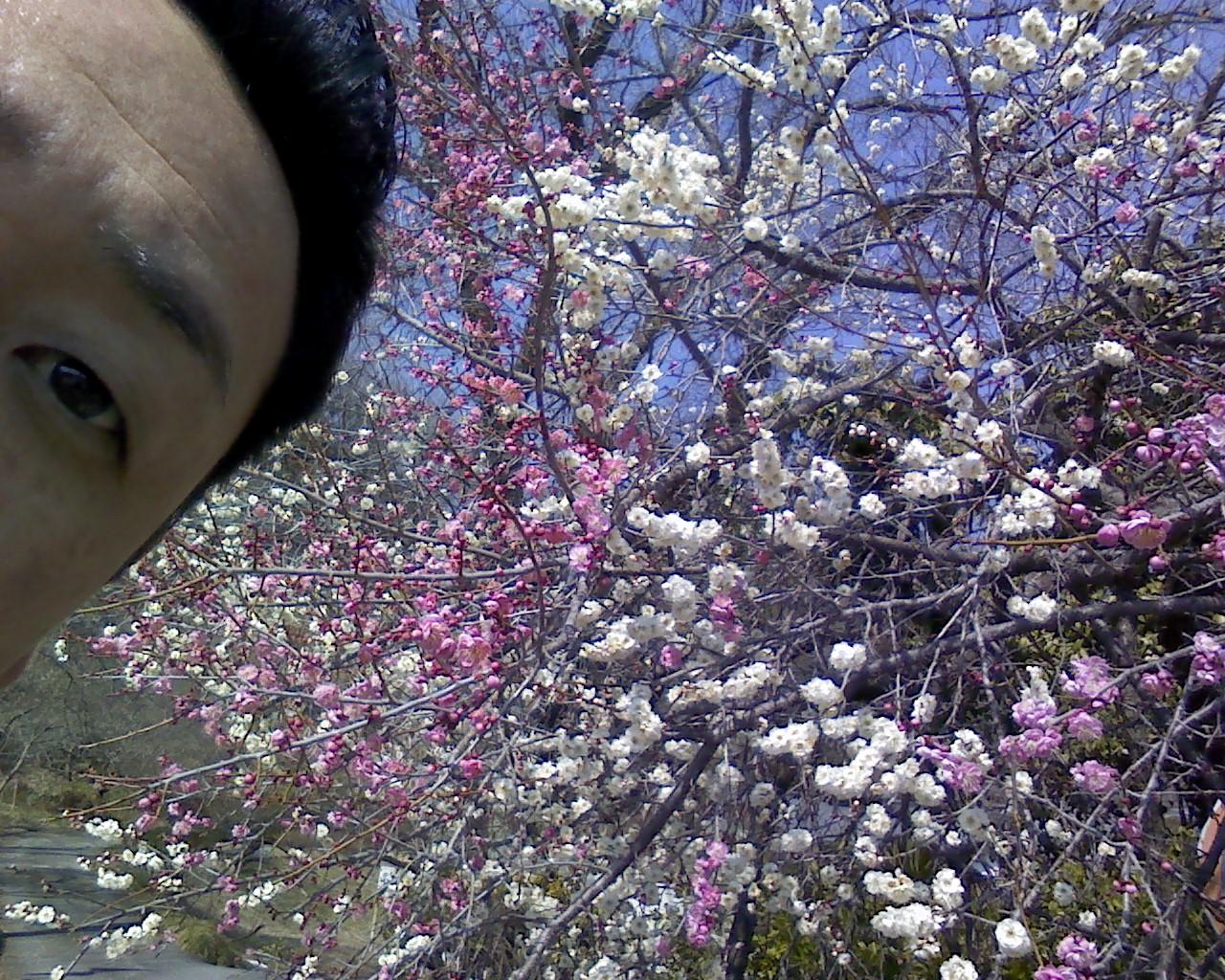 春です!(^^)/